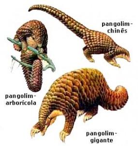 pangolim2