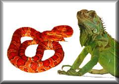 reptil5