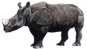 rino_indiano02