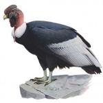 vulturgryohus