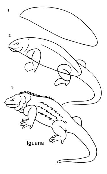 desenho_iguana
