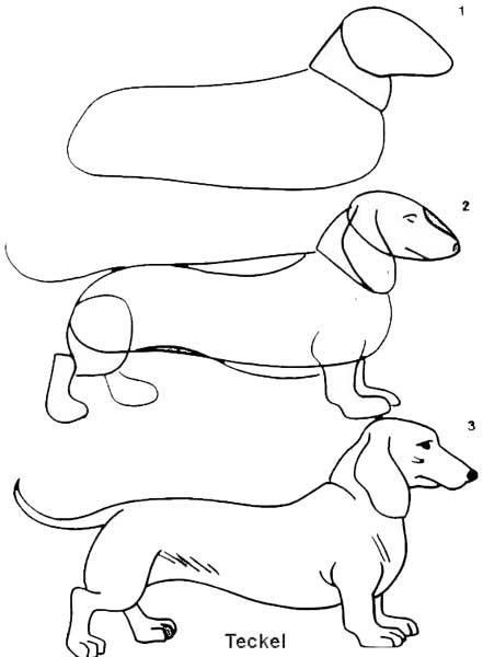 desenho_teckel