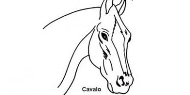 destaque4x2_des_cavalo