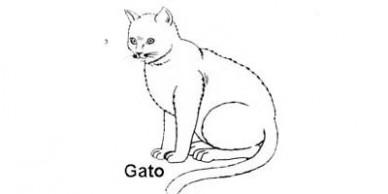destaque4x2_des_gato