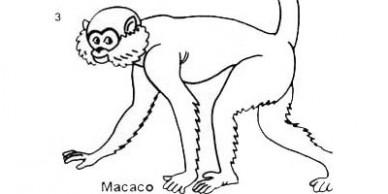 destaque4x2_des_macaco