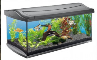 destaque_aquarium