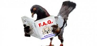 faq_destaque