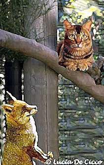 gato_raposa