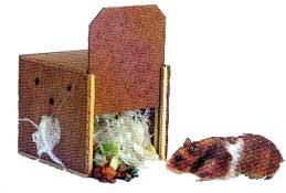 hamster_caixa