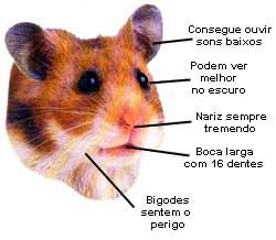 hamster_face