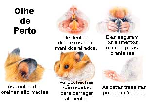hamster_perto