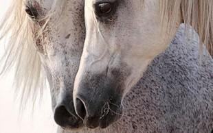 destaque_cavalo4