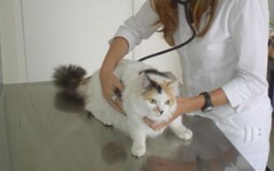 destaque_clinica2