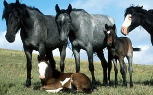 destaque_equinos