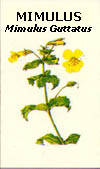 floral11