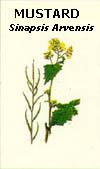 floral14