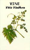 floral22