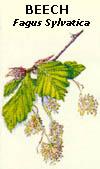 floral23