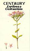 floral24