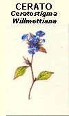 floral25