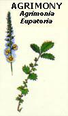 floral27