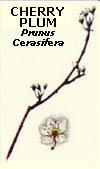 floral28