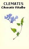 floral31