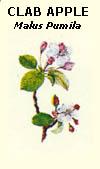 floral32
