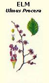 floral33