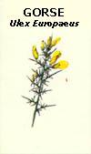floral35