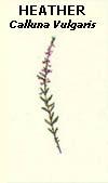 floral36