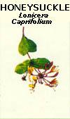 floral38