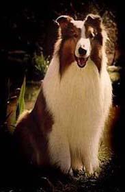 lassie-1