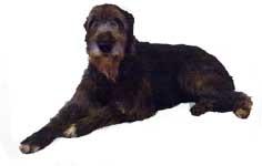 wolfhound3