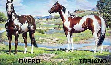 paint_horse_colors