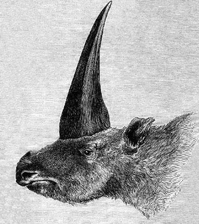 unicorniosiberiano