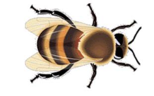 destaque_abelha