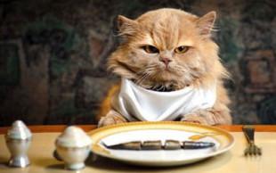 destaque_alimento_gato