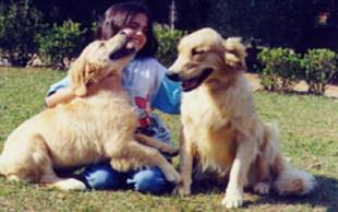 destaque_morte_animal