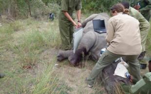 destaque_noticia_rinoceronte