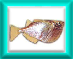 peixe17