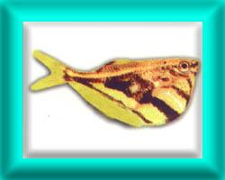 peixe18