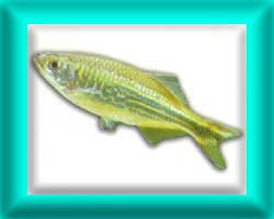 peixe19
