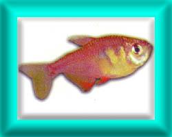 peixe24