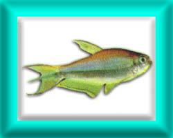 peixe25