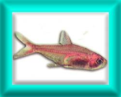 peixe26
