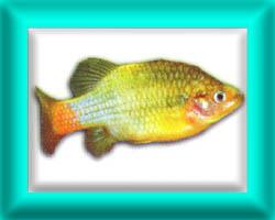 peixe27