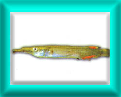 peixe28