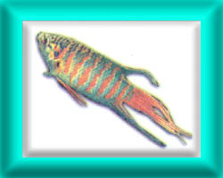 peixe29