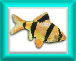peixe34